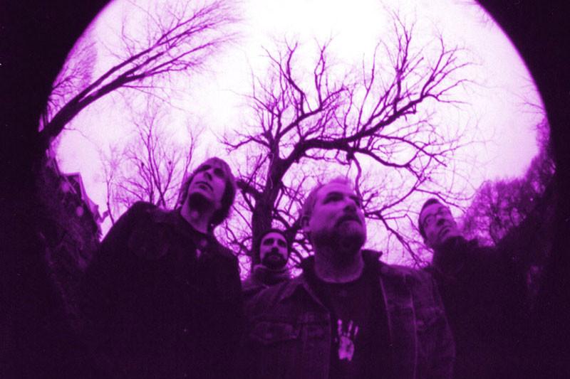 Hawk3_violet